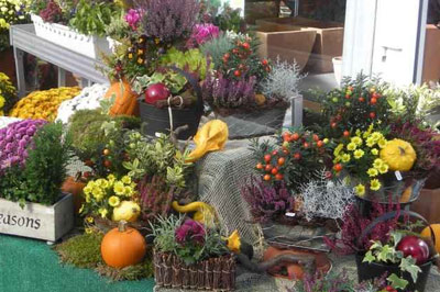 Vielfältige Musterpflanzungen  gaben Anregungen, wie es auch bei Ihnen zu  Hause blühen kann.
