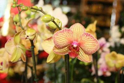 Natürlich gibt es auch Orchideen und andere Blumen.