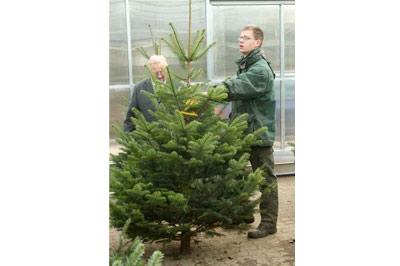 Selbstverständlich gab es  auch schon eine große Auswahl  an Weihnachtsbäumen.